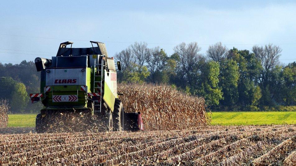 Feldhäcksler im Mais